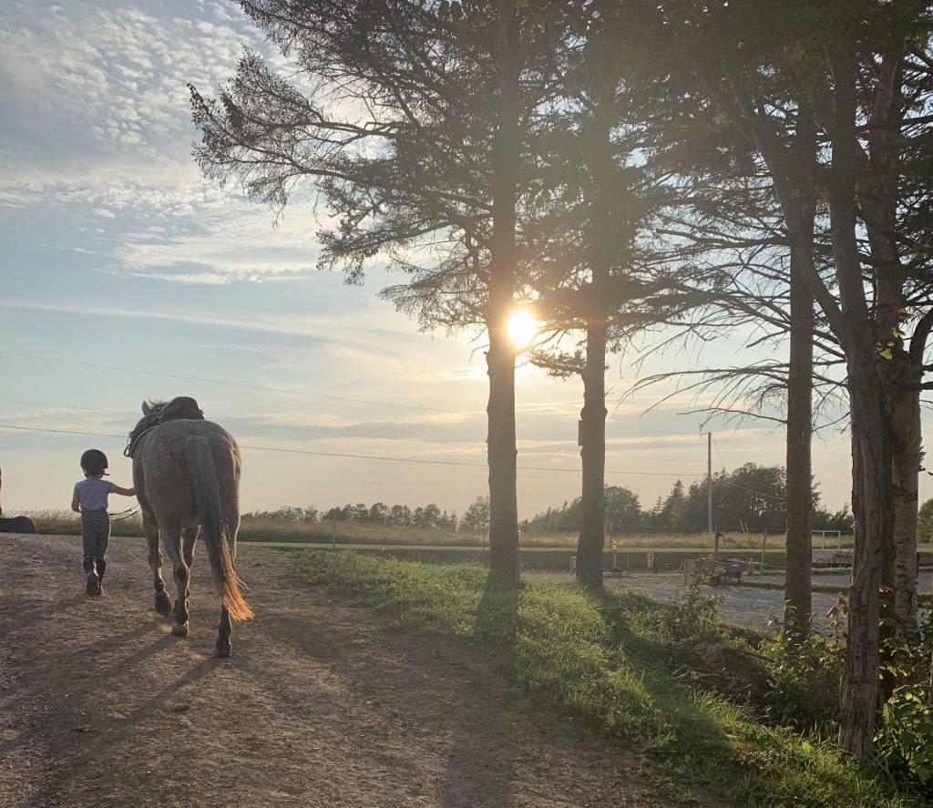 Reaching Strides Equestrian